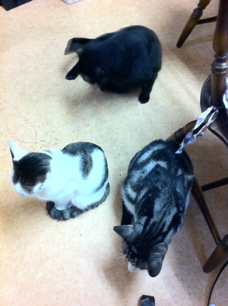 IMG_4751猫達