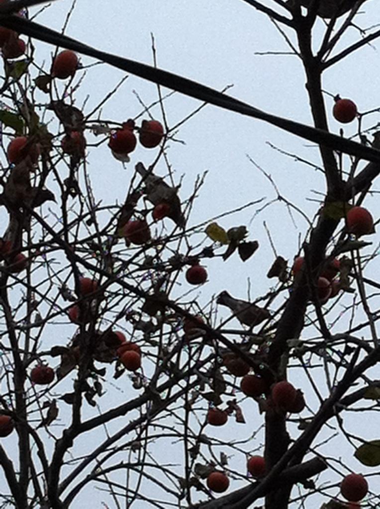 IMG_5776柿と小鳥