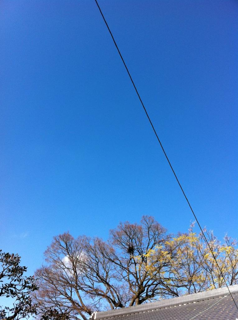 IMG_5901榎木とセンダン
