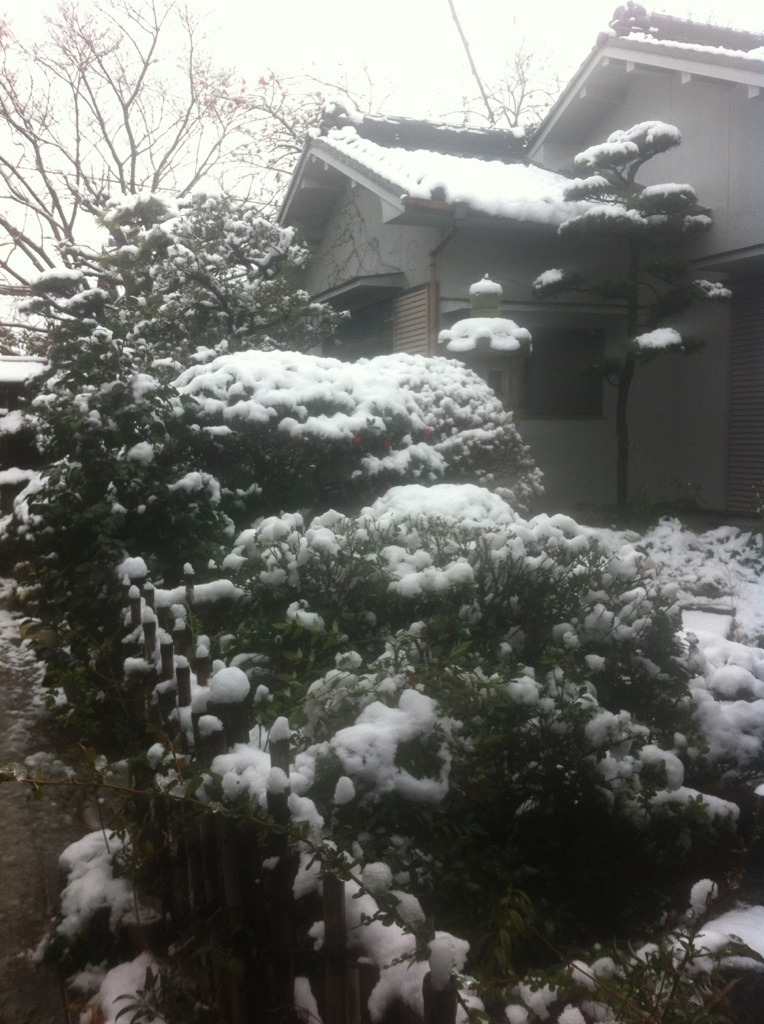 IMG_5479雪