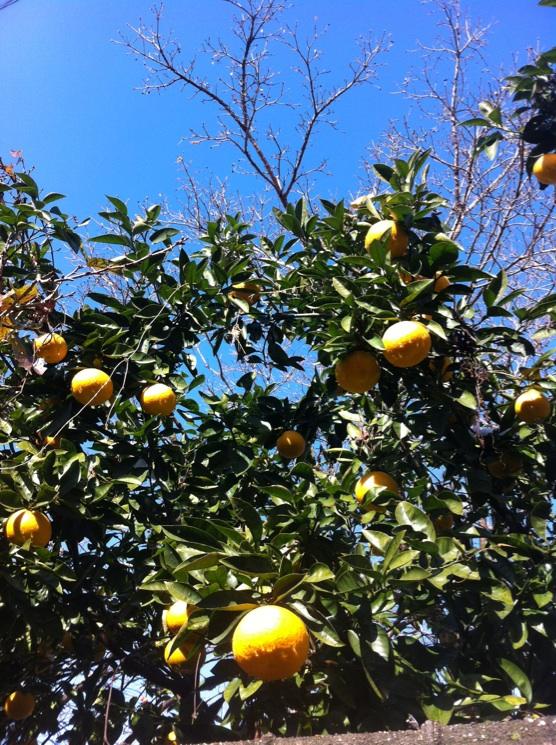 IMG_9337柑橘