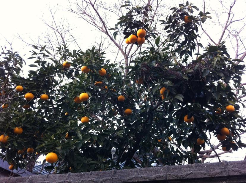 IMG_8222柑橘