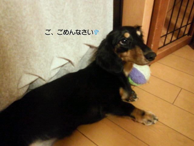 SBCA0026.jpg