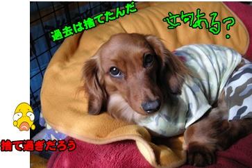 DSCN1861re.jpg