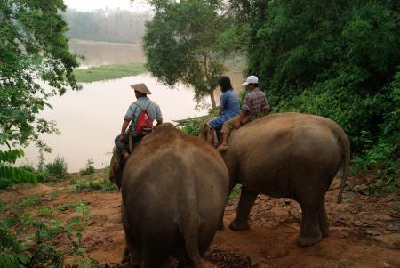 elephant camp8