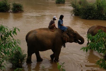 elephant camp5