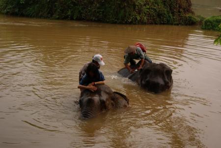 elephant camp11