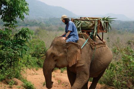 elephant camp9