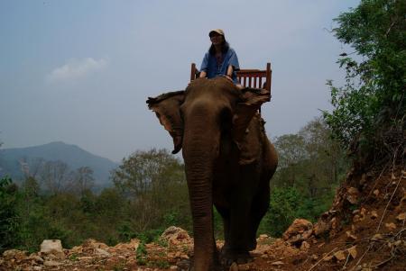 elephant camp12