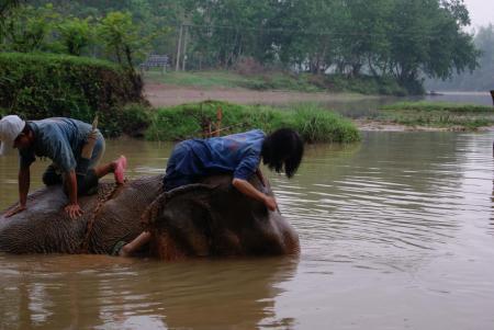elephant camp13