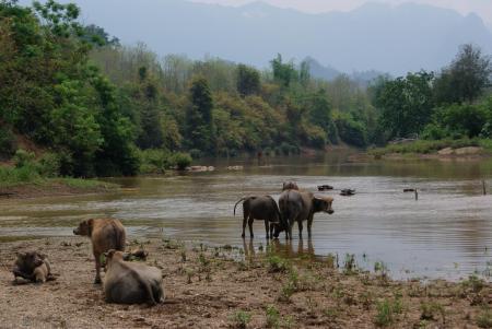 elephant camp14