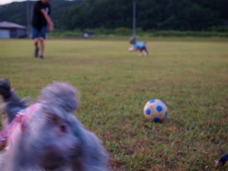 ボールで遊ぶでつぅぅぅぅ(怒)