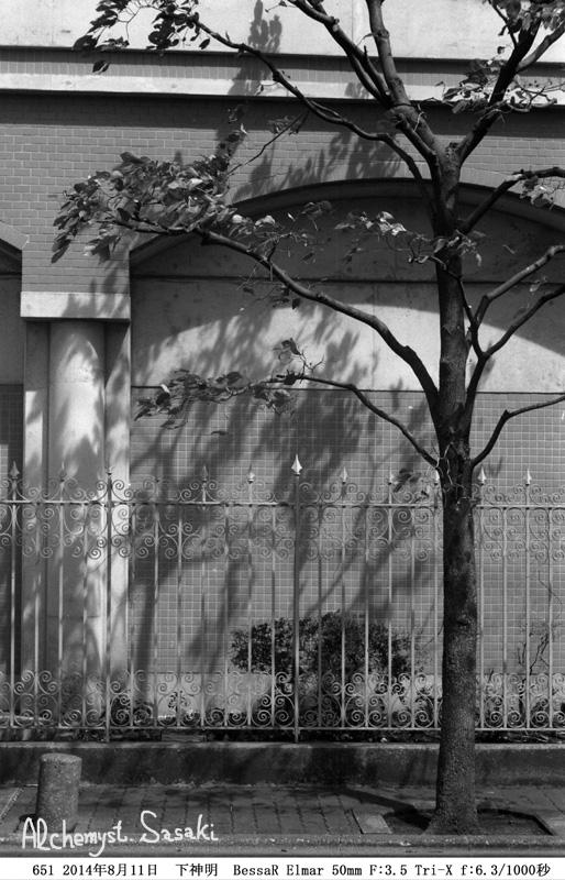 街路樹50mm651-3