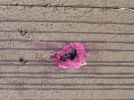20121011 004 空からの落し物