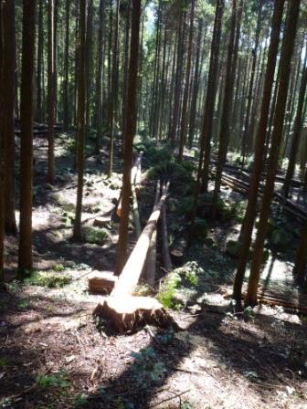 20121024 003林業
