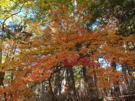 021 登山道の紅葉