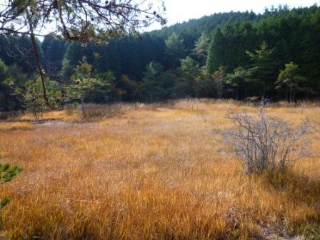 20121107 007黒の田