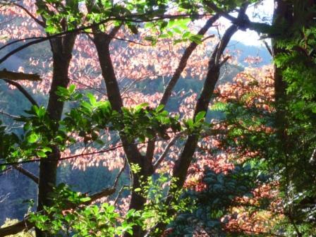 20121116 034赤葉がきれい