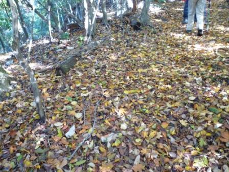 20121116 036落ち葉の絨毯