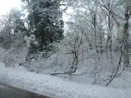 003 雪木
