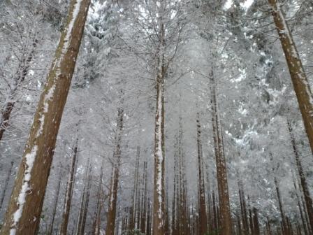 20121211 4白い木々