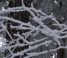 20121211 6白い小枝