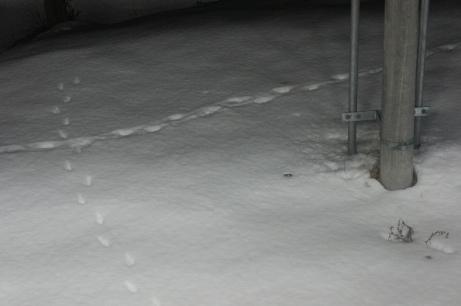 2010-12 誰かの足跡