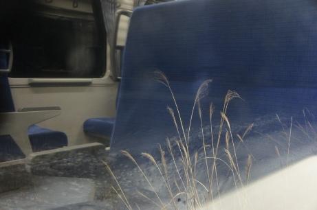 2010-12 雪原と青いシート