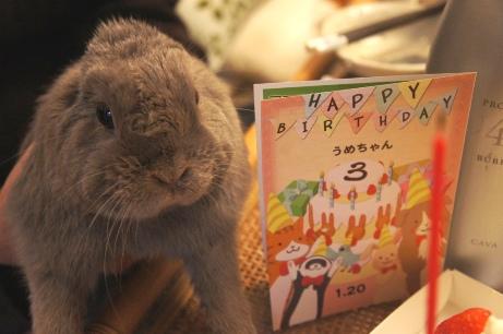 うめ様三歳おめでとうっ!