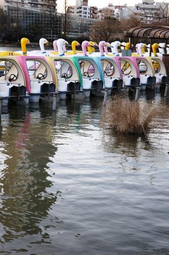 2011-01 不忍池の白鳥ボート