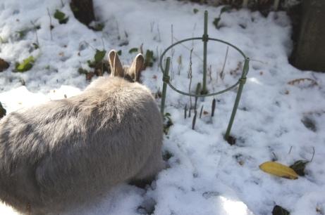 うめ様雪遊び②