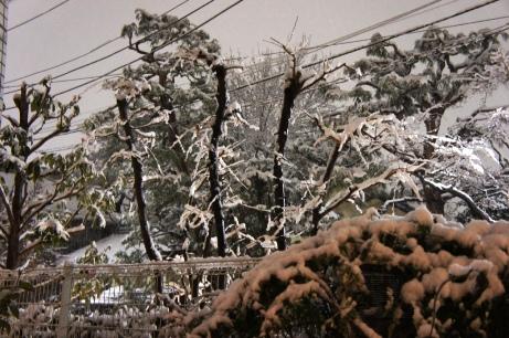 20110214雪景色③