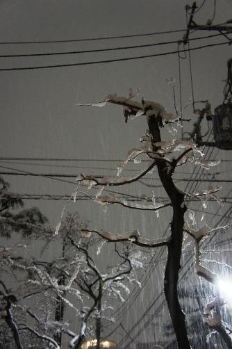 20110214雪景色②