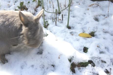 うめ様雪遊び③