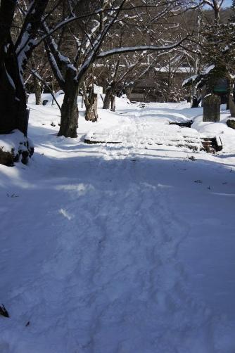 この坂道で転びました