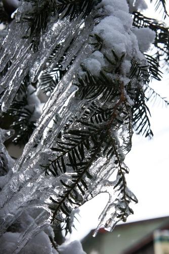 凍り付いた木