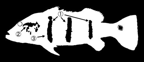 pi-09.jpg
