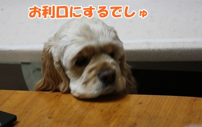001_20110211115245.jpg