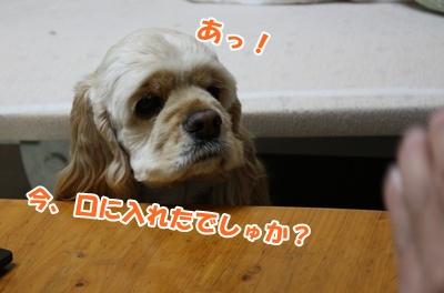002_20110211115245.jpg