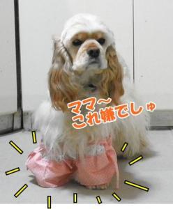 002_20110214210750.jpg