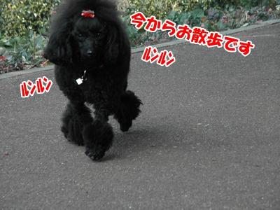 003_20110206214632.jpg