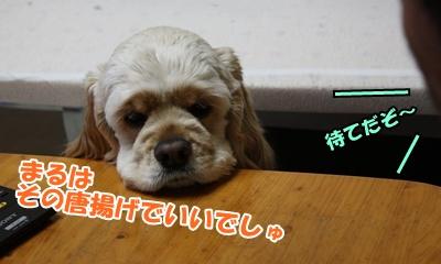 003_20110211115244.jpg
