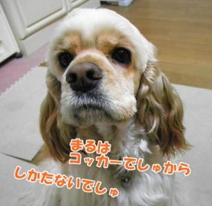 004_20110204215842.jpg