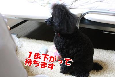 004_20110211115244.jpg