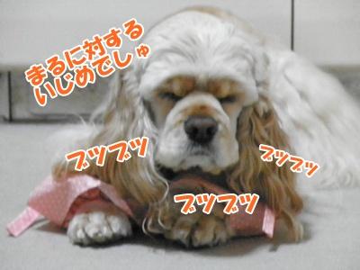 004_20110214210749.jpg