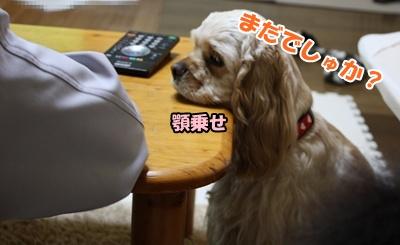 006_20110211115244.jpg