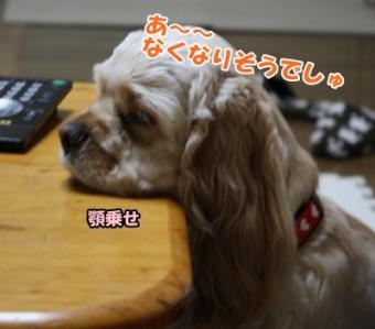 007_20110211115315.jpg