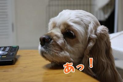 008_20110211115315.jpg