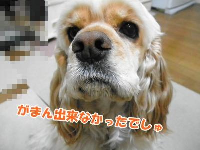009_20110204215842.jpg