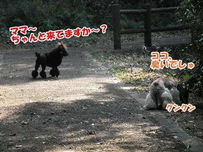 009_20110206214709.jpg